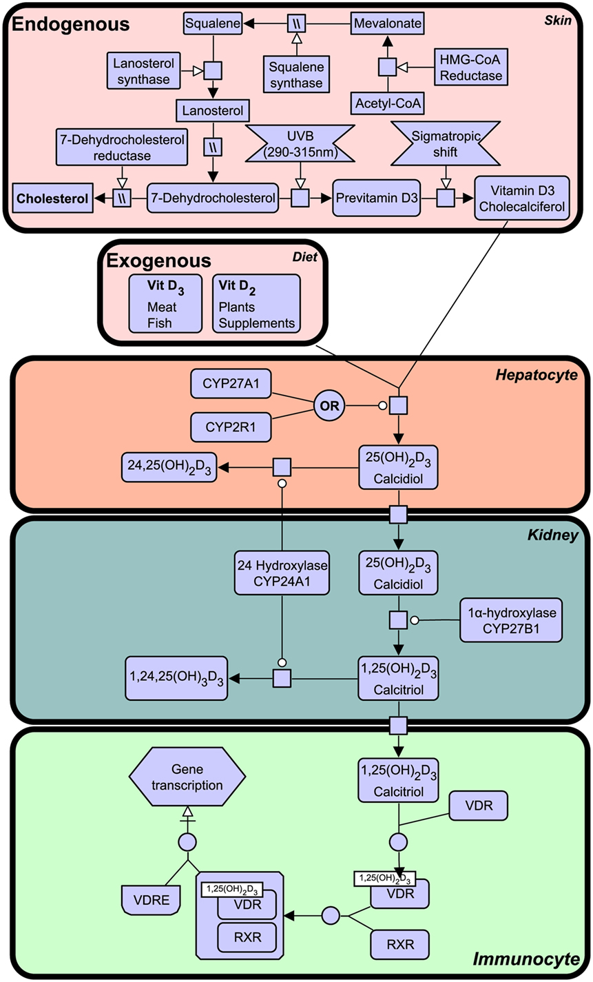 Frontiers | Evolutionary Origin of the Interferon–Immune Metabolic on johnson 55 hp wiring diagram, johnson 25 hp wiring diagram, johnson 40 hp wiring diagram, johnson 50 hp wiring diagram, johnson 90 hp wiring diagram, johnson 60 hp wiring diagram, johnson 15 hp wiring diagram, johnson 75 hp wiring diagram, johnson 28 hp wiring diagram, johnson 20 hp wiring diagram, johnson 70 hp wiring diagram, johnson 100 hp wiring diagram, johnson 115 hp wiring diagram,