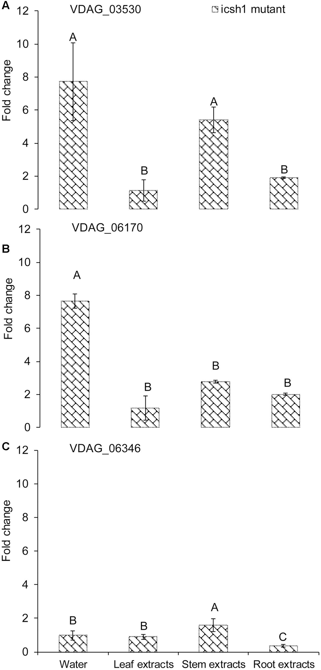 Frontiers   Verticillium dahliae's Isochorismatase Hydrolase Is a