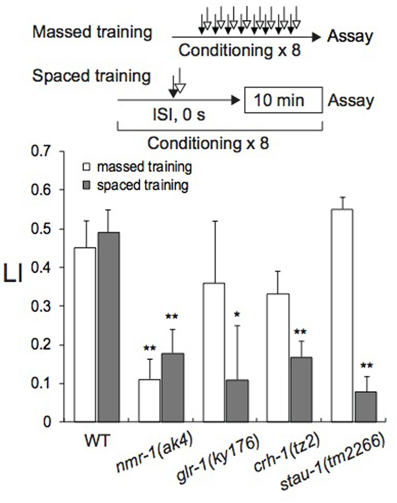 Frontiers | Appetitive Olfactory Learning and Long-Term Associative ...