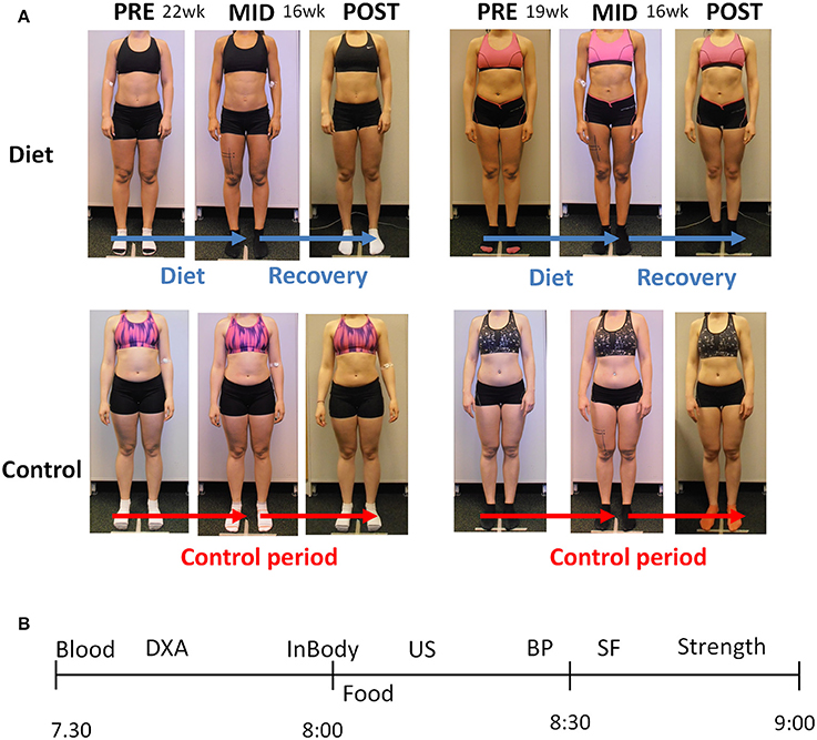 Frontiers | The Effects of Intensive Weight Reduction on Body