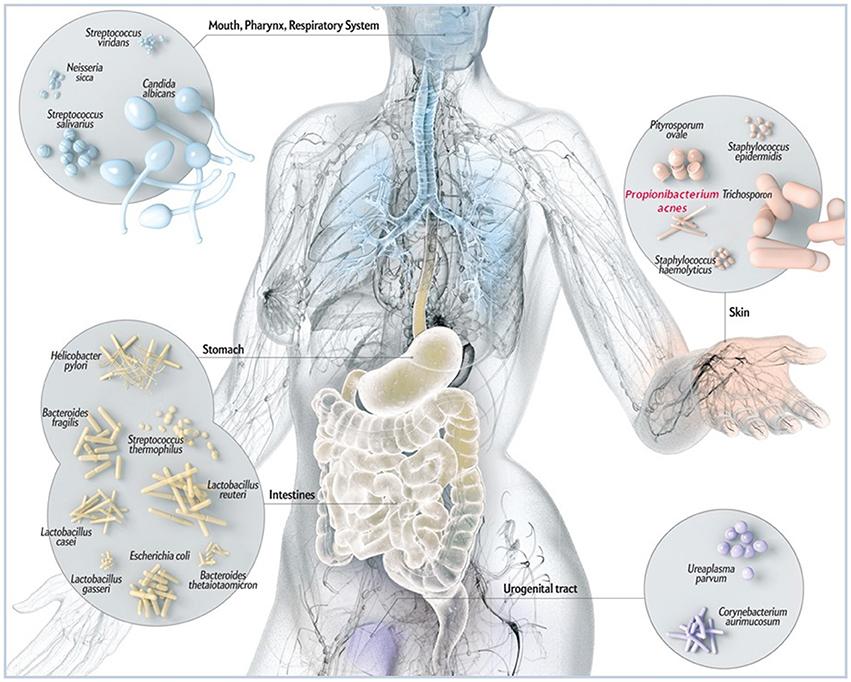 Receptek a prosztatagyulladással - Masszázs