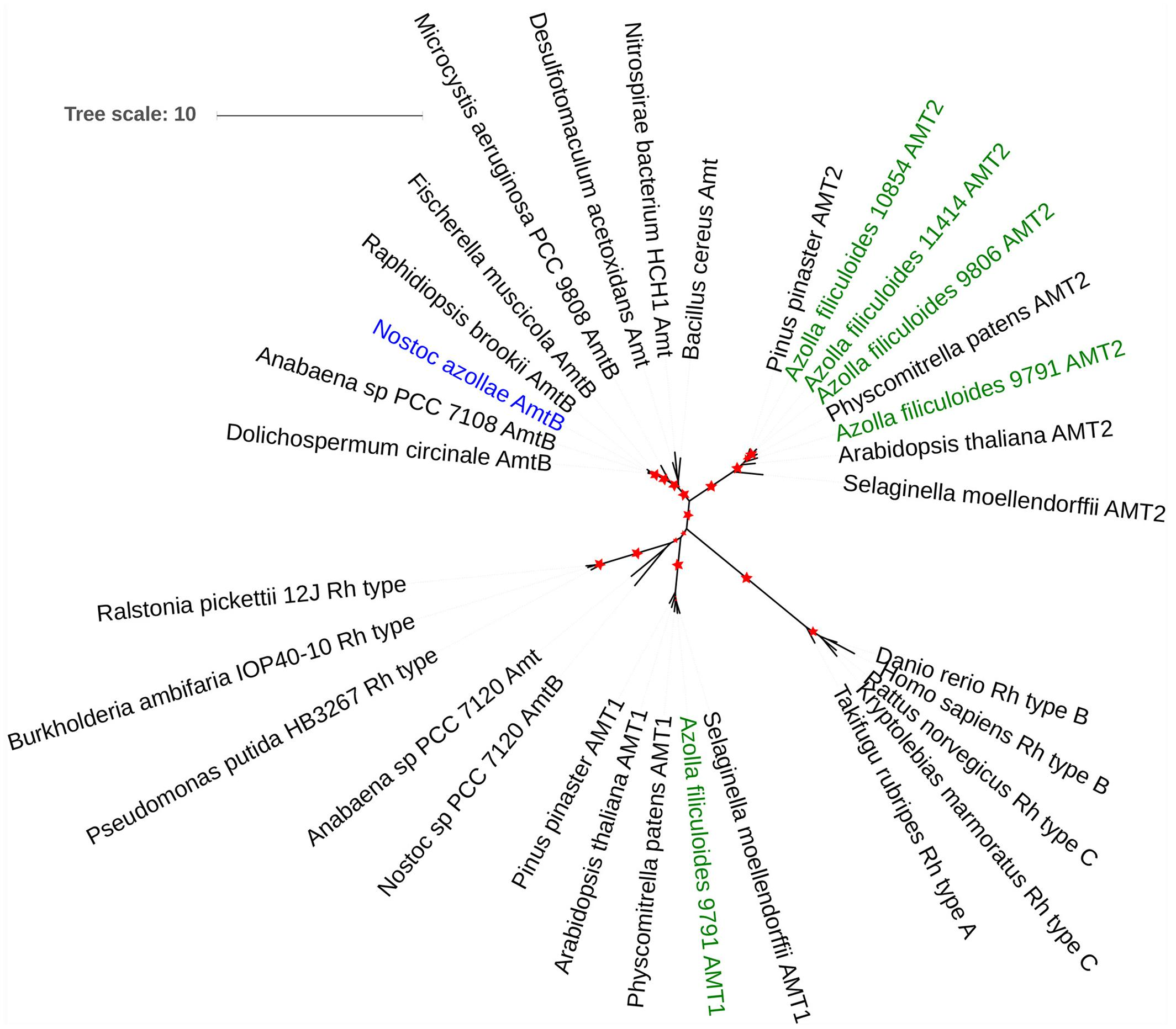 Frontiers metabolic adaptation a specialized leaf organ frontiersin pooptronica