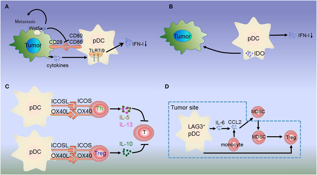 Frontiers | Disease-Associated Plasmacytoid Dendritic Cells