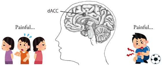 Figure 1 - The brain responses to social and physical injuries.
