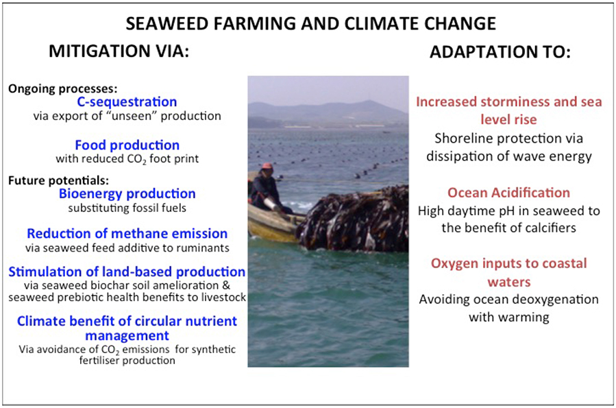 Frontiers | Can Seaweed Farming Play a Role in Climate Change