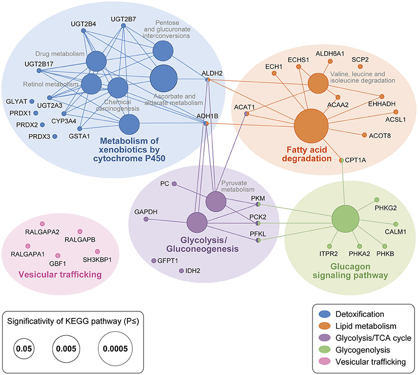 Endogenous Protein Interactome Of Human UDP