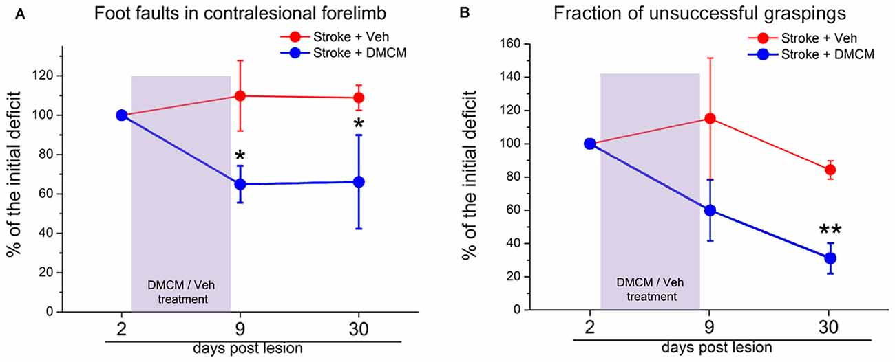 Frontiers | Neuroplastic Changes Following Brain Ischemia