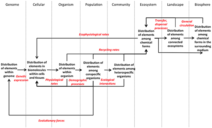 Stoichiometry Concept Map.Frontiers An Operational Framework For The Advancement Of A
