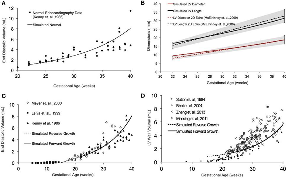 Frontiers | Model of Human Fetal Growth in Hypoplastic Left