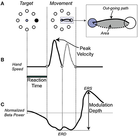 Frontiers beta oscillatory changes and retention of motor skills frontiersin ccuart Choice Image