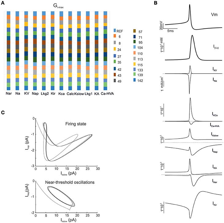 Frontiers | Single Neuron Optimization as a Basis for Accurate ...