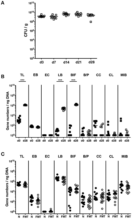 Frontiers   The Probiotic Compound VSL#3 Modulates Mucosal