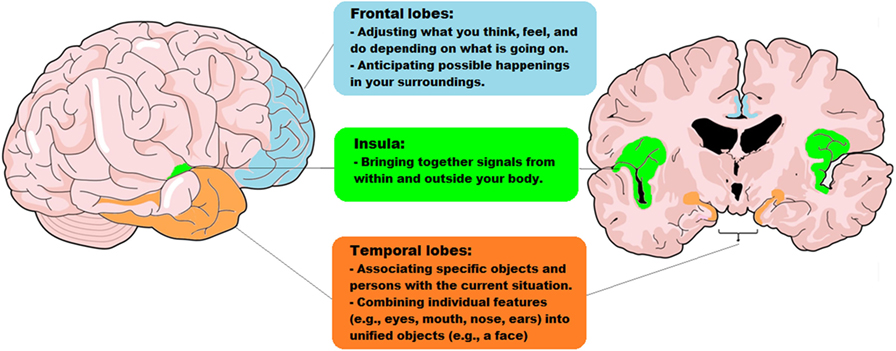 Figure 2 - The parts of the brain that work together, in the social context network model.