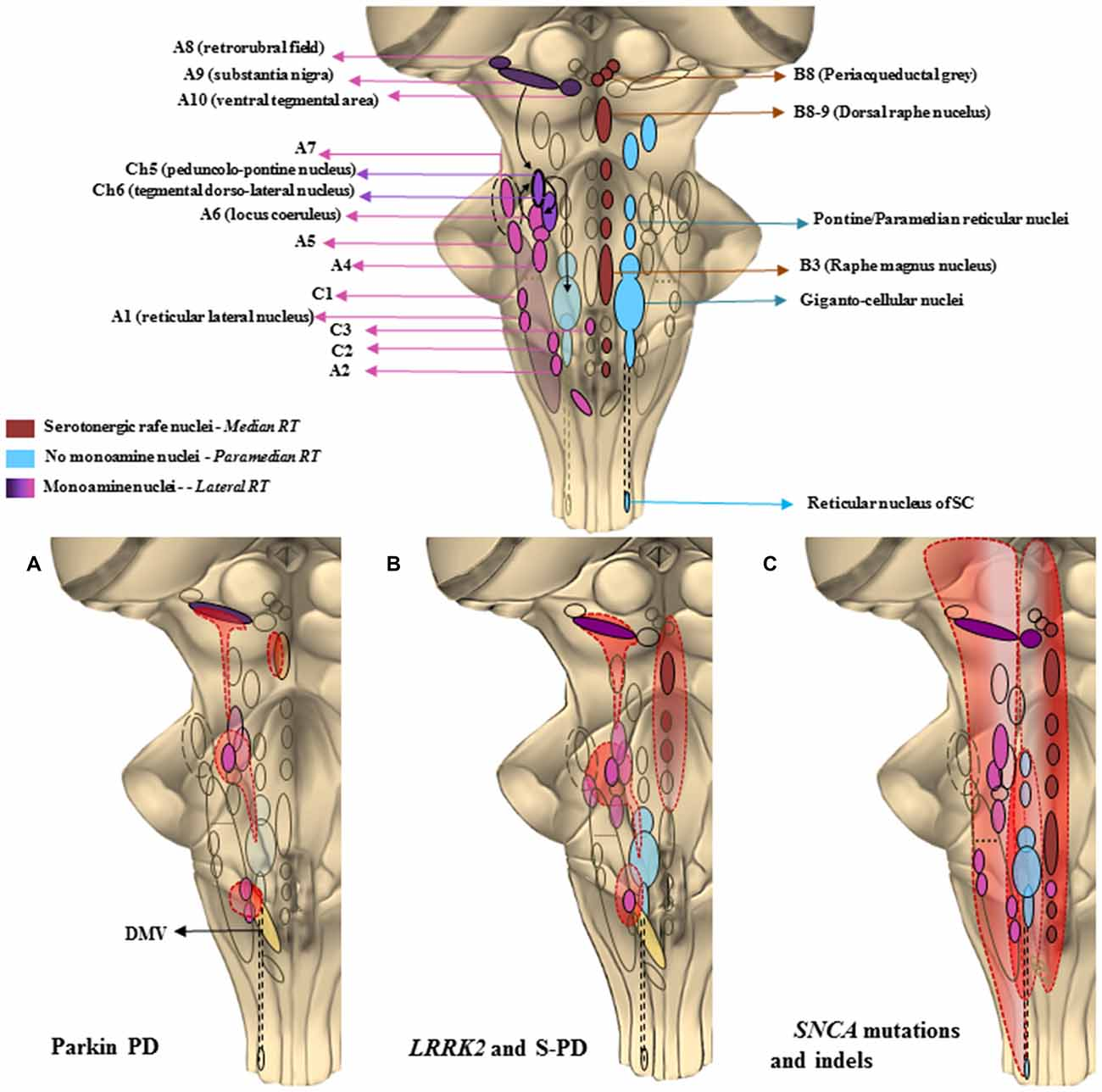 Frontiers | The Monoamine Brainstem Reticular Formation as a ...