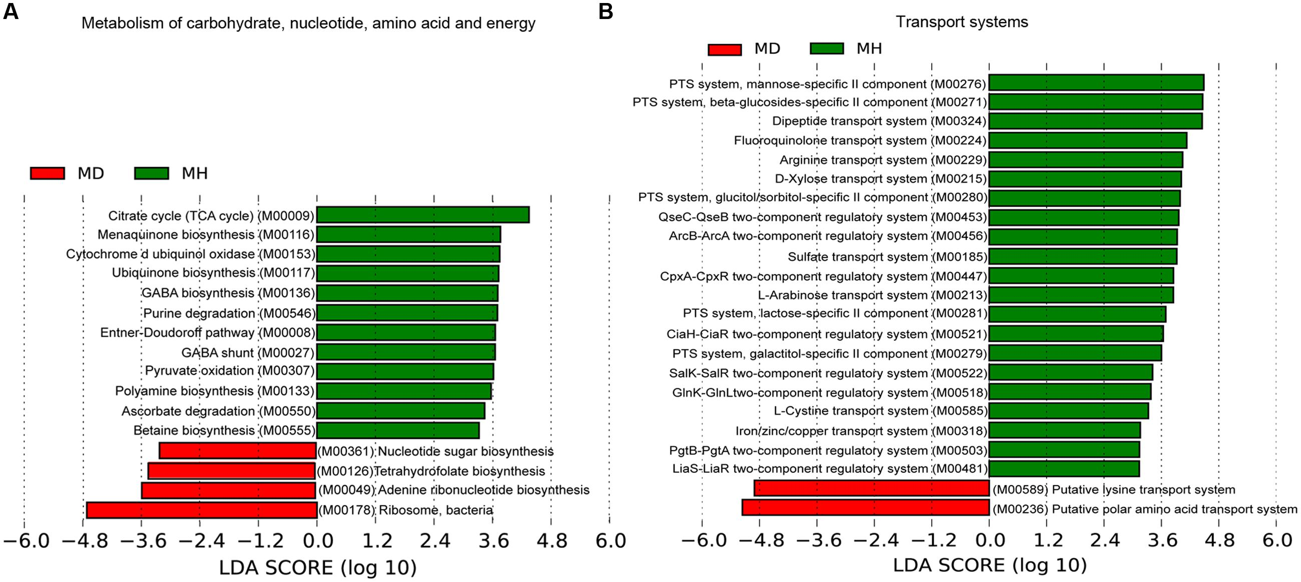 Frontiers structure and function of the fecal microbiota in frontiersin nvjuhfo Image collections