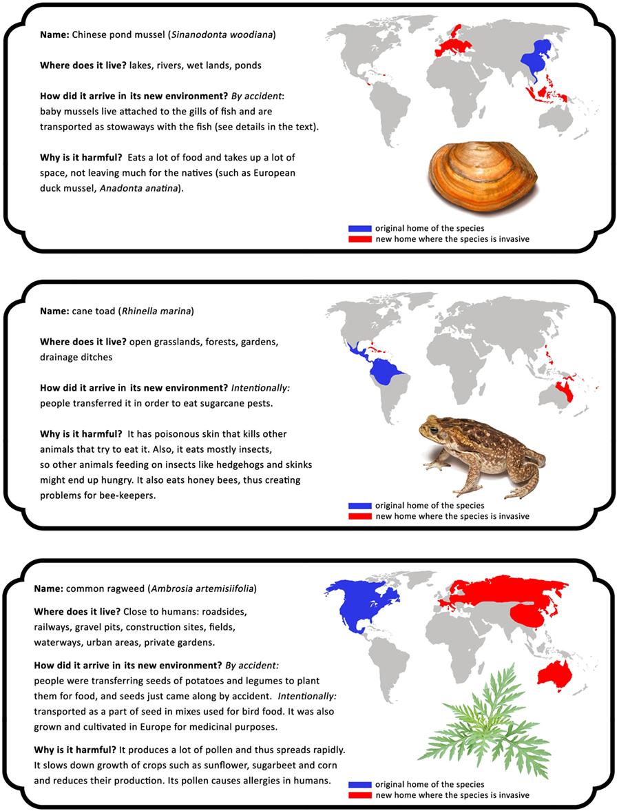 איור 2 - טבלת מינים פולשים.