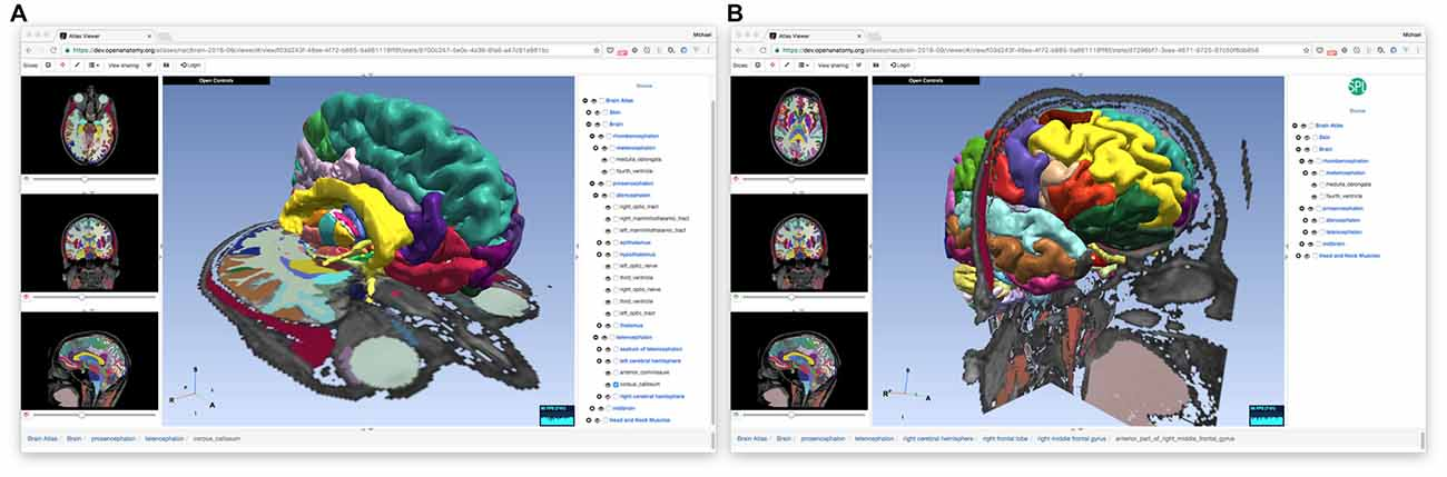 Frontiers   The Open Anatomy Browser: A Collaborative Web
