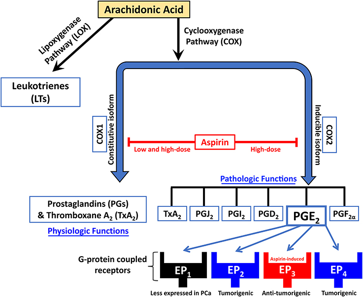 aspirin mode of action pdf