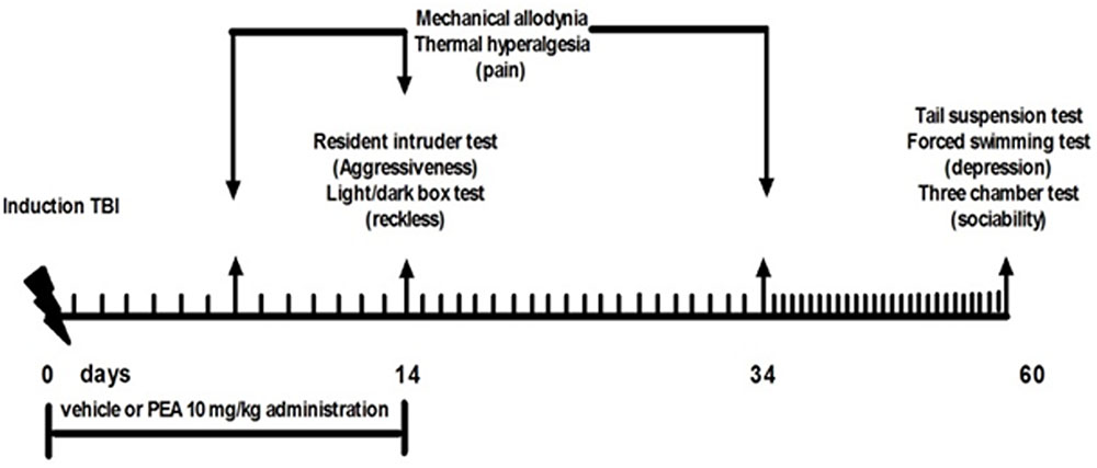 Treatment Restores Sociability In >> Frontiers Palmitoylethanolamide Reduces Neuropsychiatric Behaviors