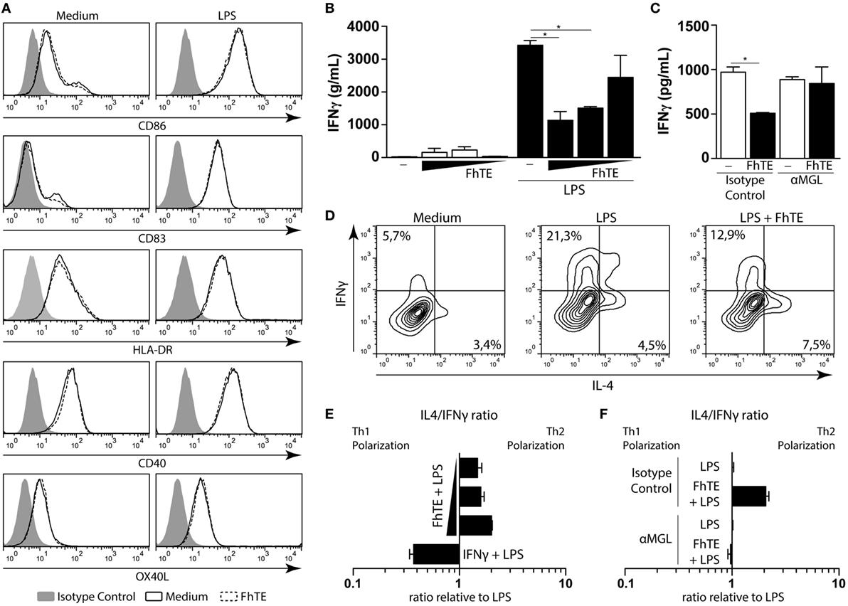Frontiers fasciola hepatica immune regulates cd11c cells by frontiersin pooptronica Image collections