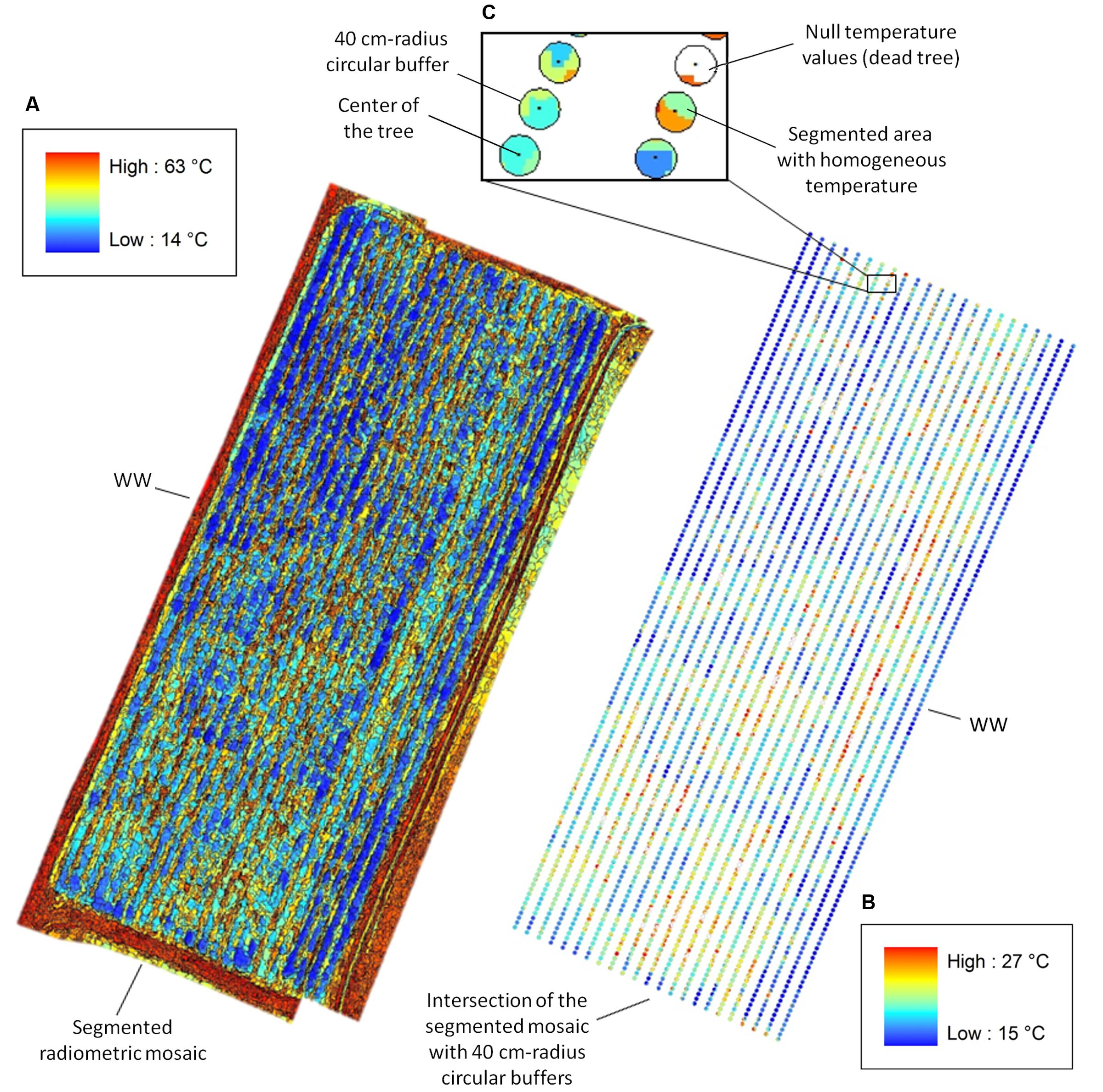 Frontiers | UAV-Based Thermal Imaging for High-Throughput Field