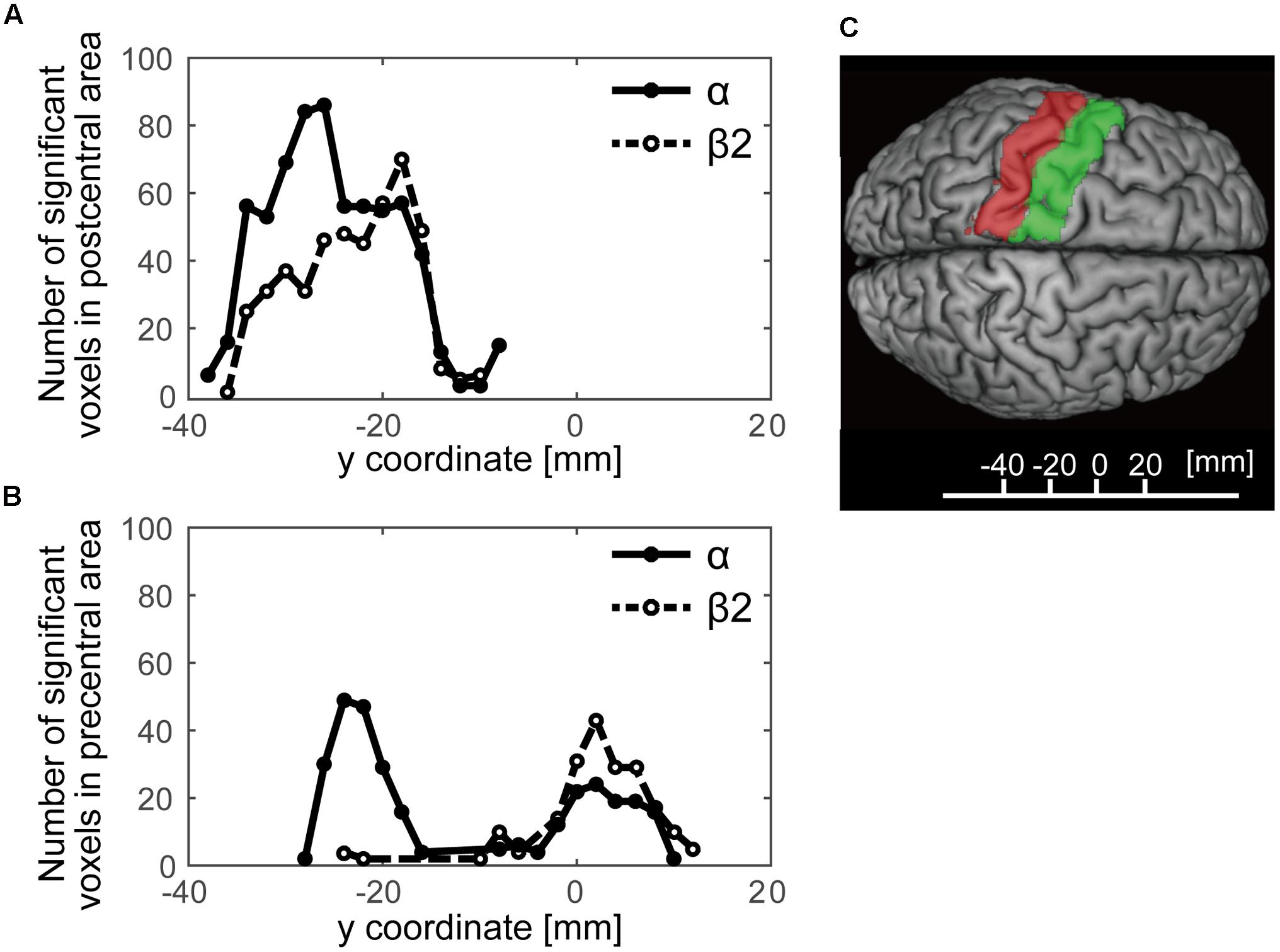 Frontiers | Resting-State Fluctuations of EEG Sensorimotor