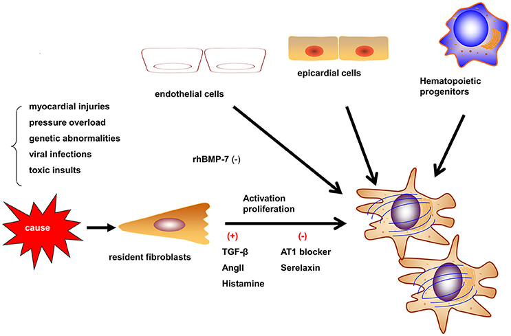 frontiers current understanding of the pathophysiology of