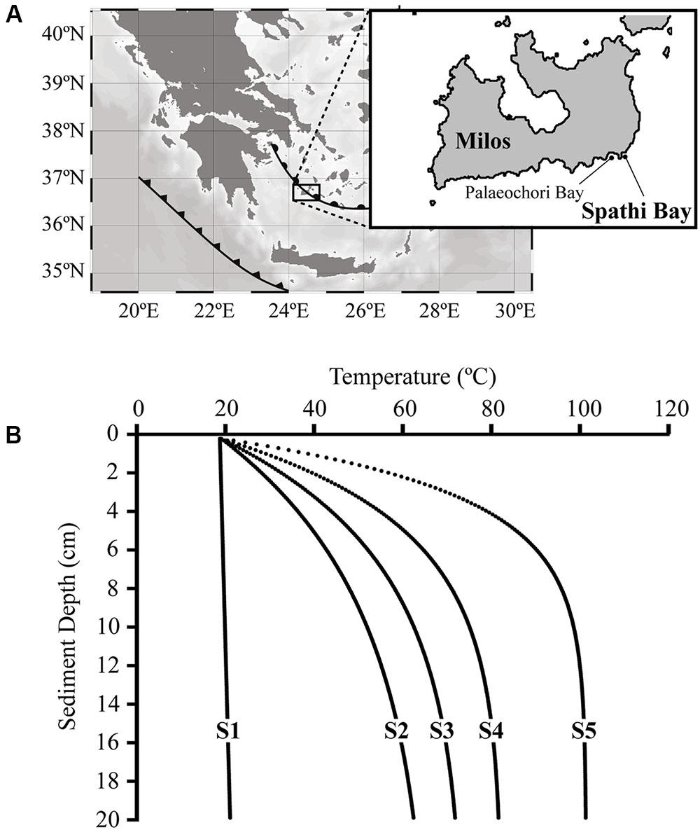 Frontiers Heat Stress Dictates Microbial Lipid Composition Along A Volia Lip Matte 04 Cosmopolitan