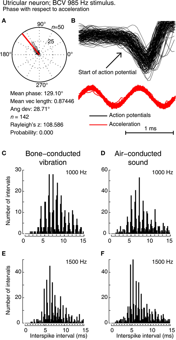 Frontiers | Sustained and Transient Vestibular Systems: A ...
