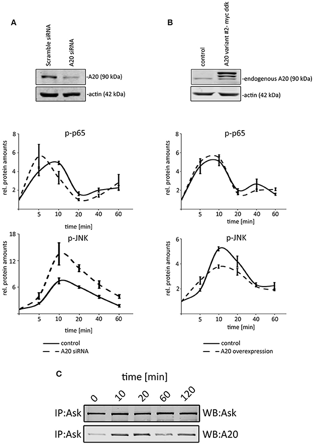 Login usingYou can login by using one of your existing accounts.                                                            Frontiers in Physiology                                                    A20/TNFAIP3 Discriminates Tumor Necrosis Factor (TNF)-Induced NF-κB from JNK Pathway Activation in Hepatocytes