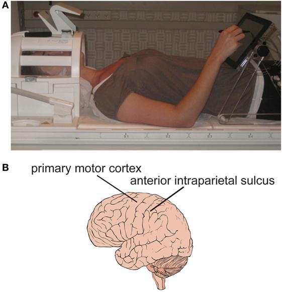 איור 4 - A. משתתף בניסוי שוכב על מיטת סורק דימות תהודה מגנטית וכותב על מסך מגע.