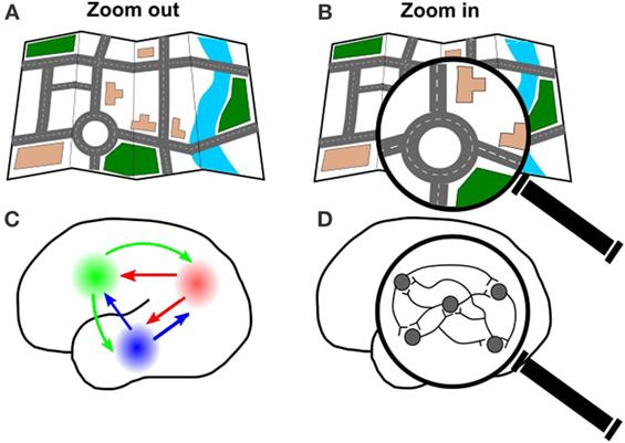 איור 3 - A. בדיוק כפי שאפשר להסתכל על מפת העיר כולה B. או להתמקד בכביש מסוים,  אתם  גם  יכולים  להתבונן  בקישורים  שבמוח  כולו  C. או להתמקד בקבוצת תאים מסוימת D. Zoom  out = הקטנת התצוגה Zoom in = הגדלת התצוגה לצורך התמקדות.