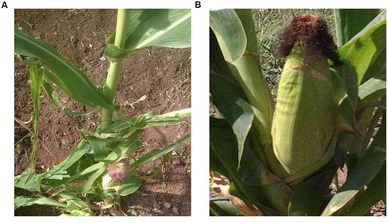 phosphorus in plant food lab report