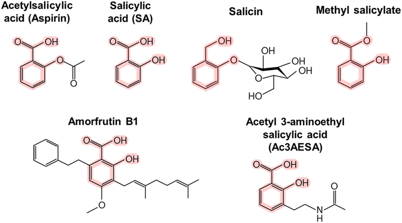 Figure 1 - Chemical structures of salicylic acid (SA) and its man-made and natural relatives.