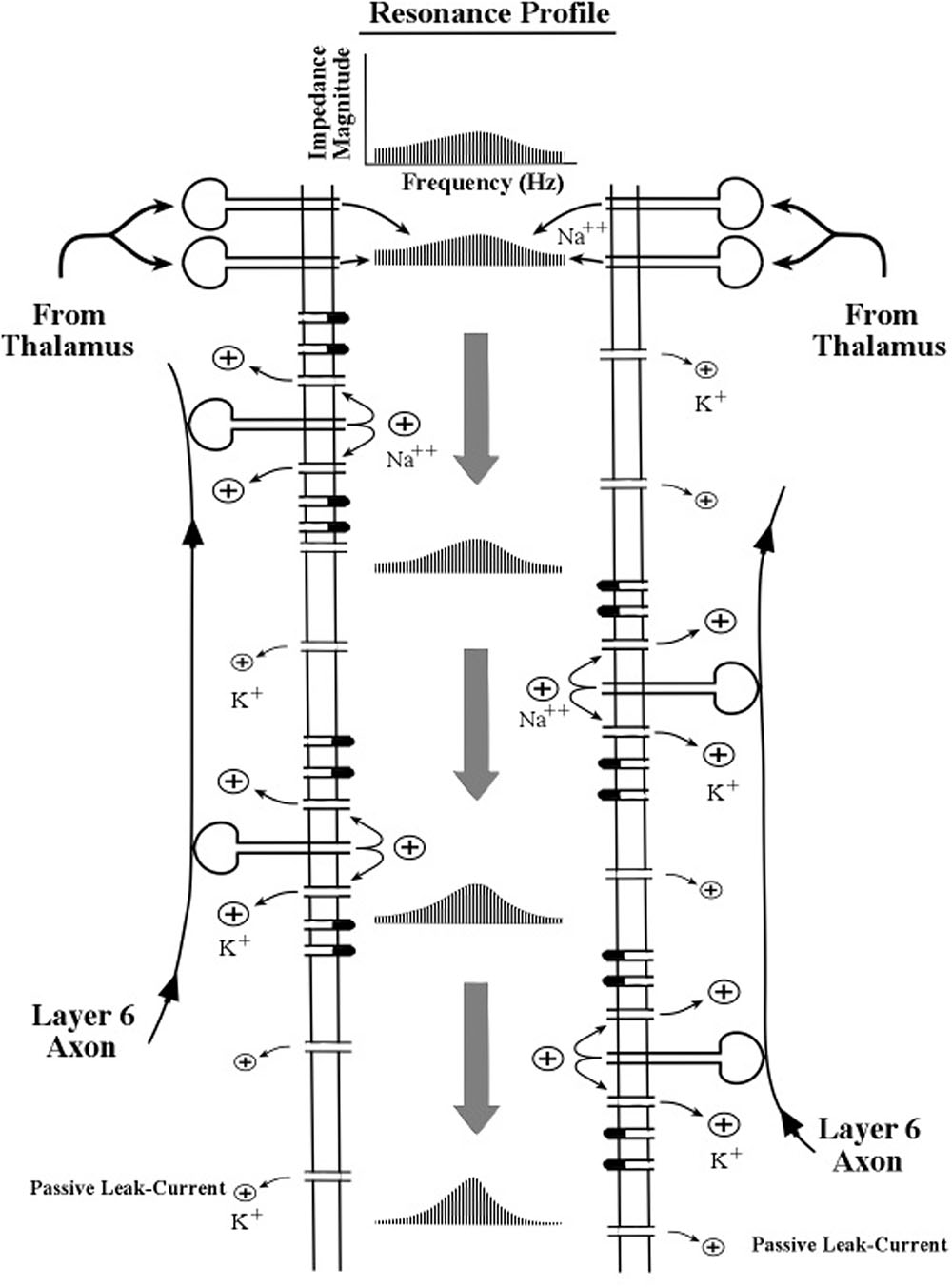 Frontiers Neuroelectric Tuning Of Cortical Oscillations By Apical Http Circuitdiagramorg Automaticnimhbatterychargercircuithtml Figure 4 Schematic Diagram