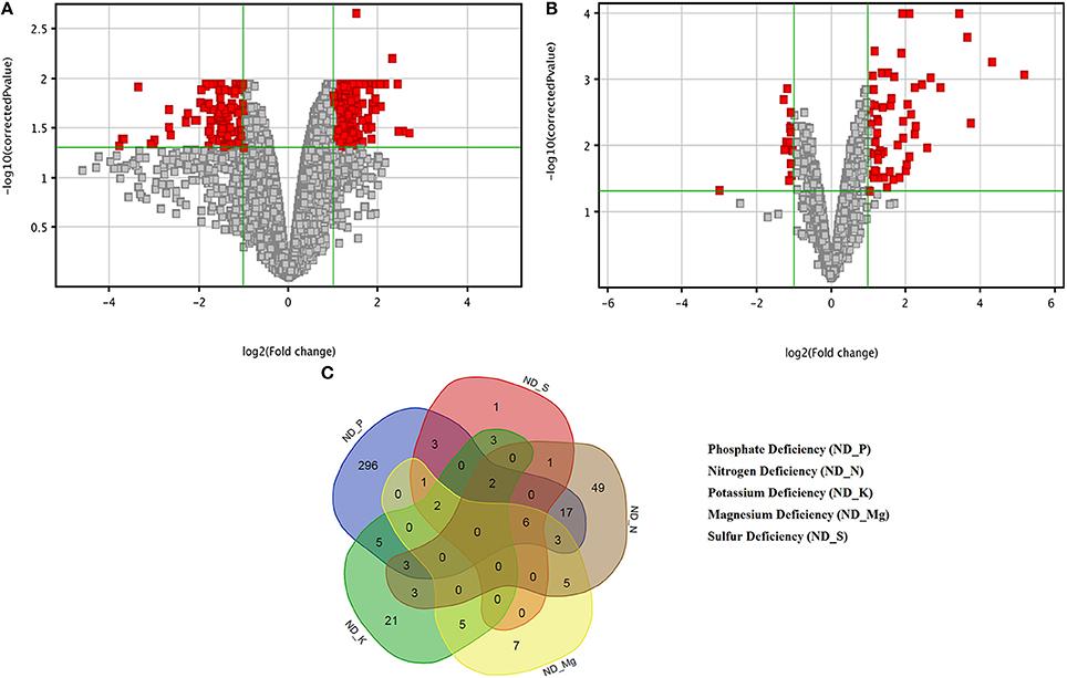 Frontiers   Transcriptomic Analysis of Soil Grown T
