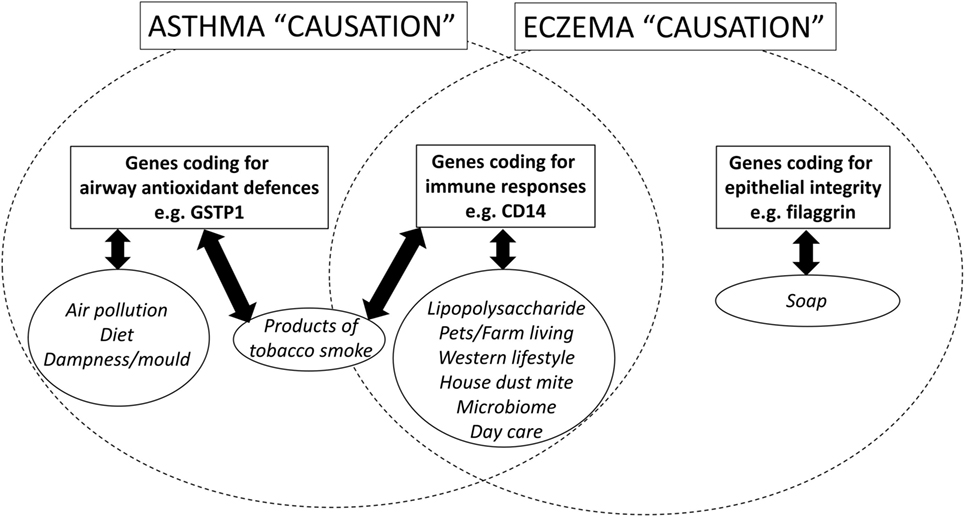 relationship between asthma and the environment