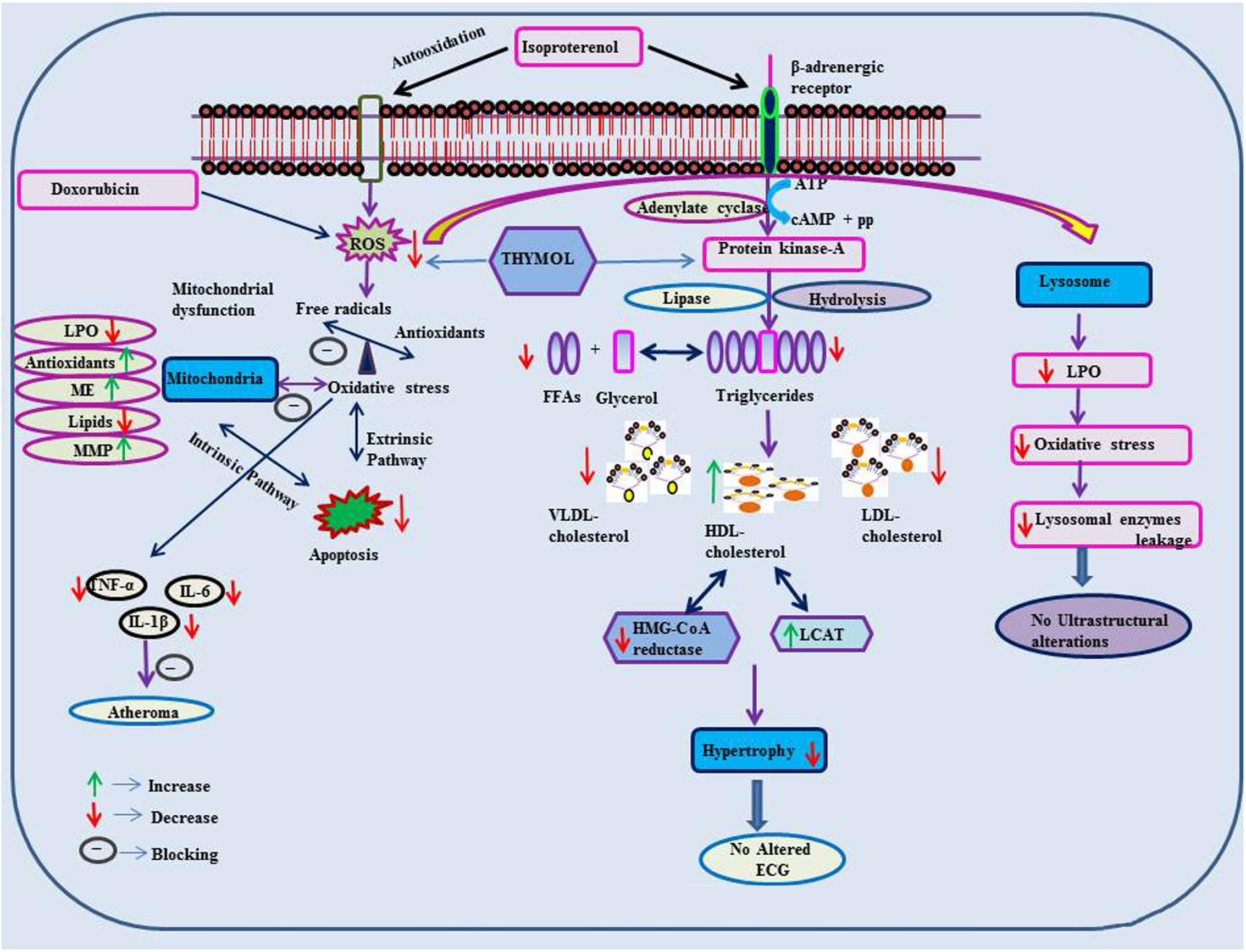 Frontiers | Pharmacological Properties and Molecular