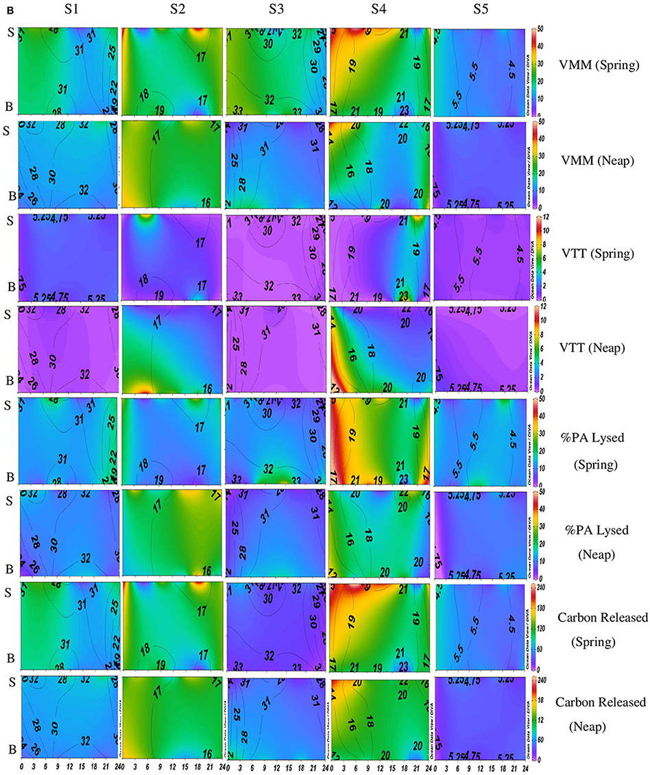 Frontiers | Viral-Induced Mortality of Prokaryotes in a