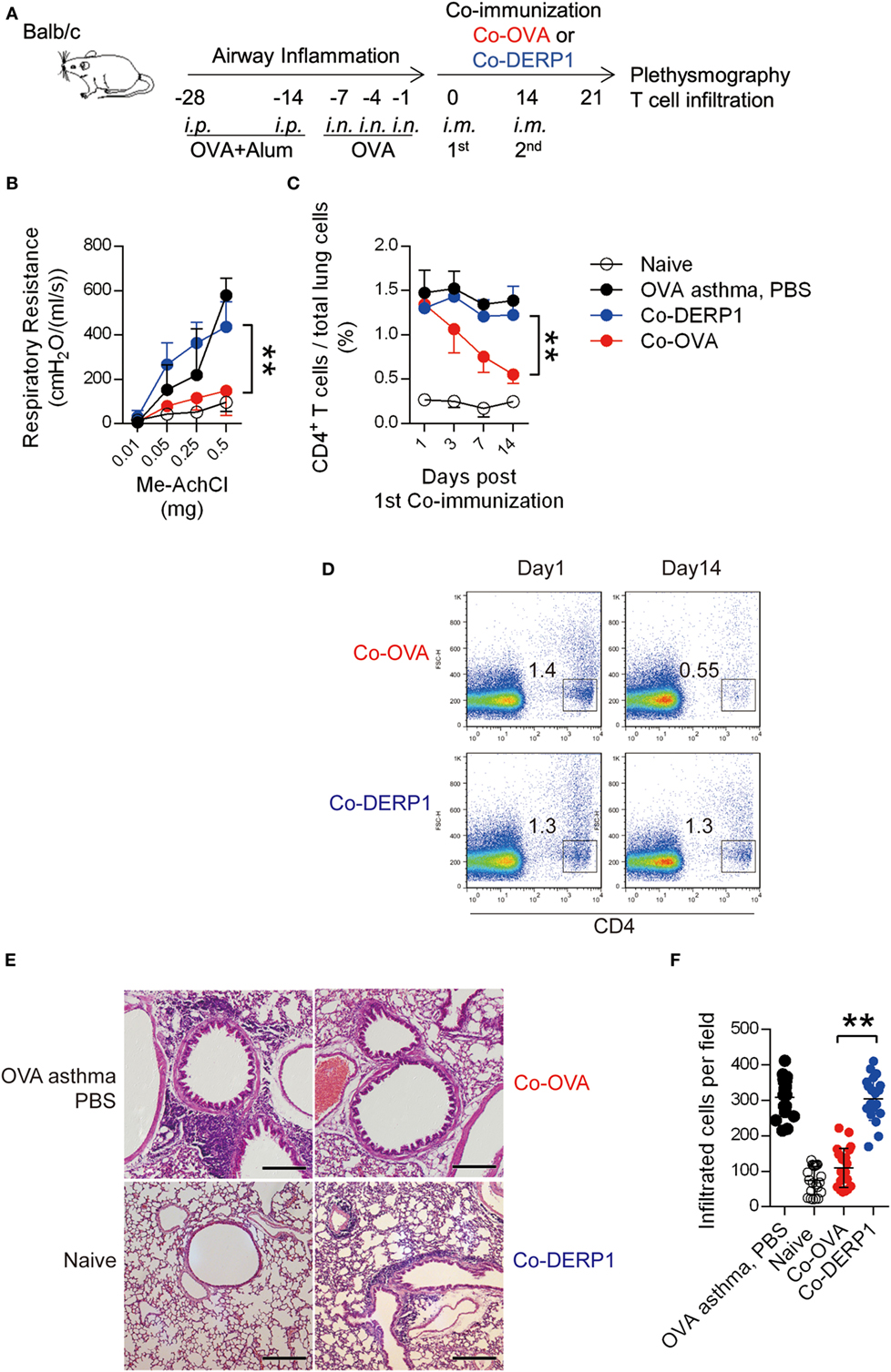 Frontiers Induced Regulatory T Cells Superimpose Their Suppressive Reed Switches 2 1 What Is It Polarized And Memory