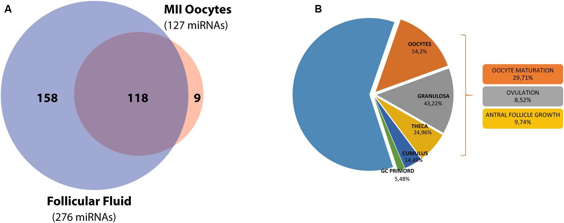 www frontiersin org  figure 1  mirna distribution in the ovarian follicle
