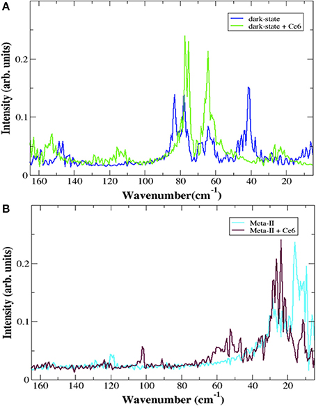 Frontiers | Chlorophyll-Derivative Modulation of Rhodopsin
