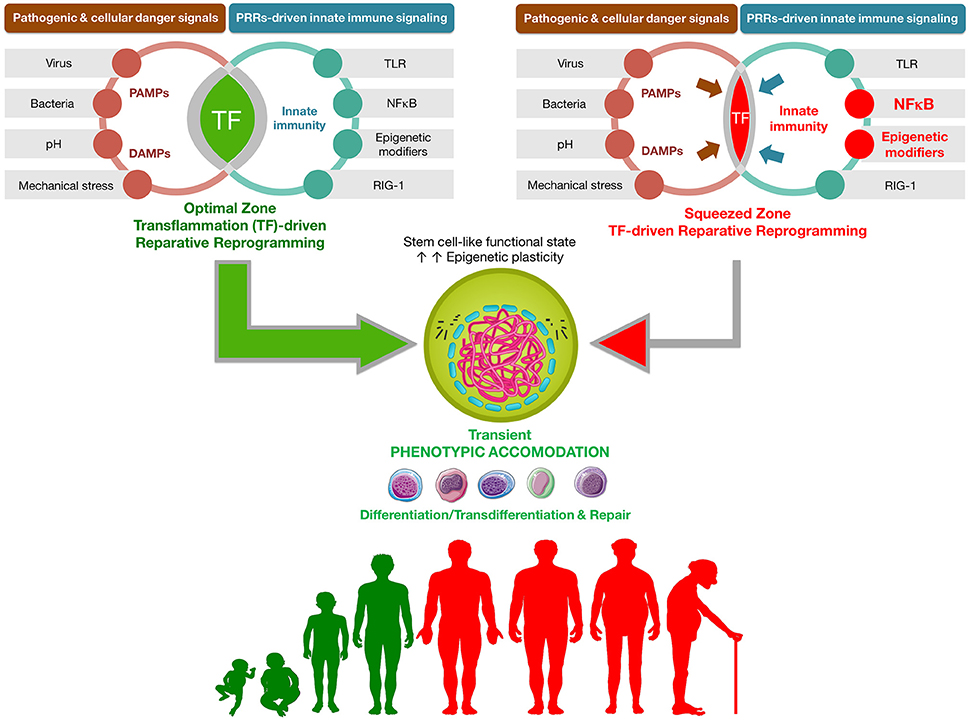 Epigenetics Vitamin Supplements And Cellular Reprogramming