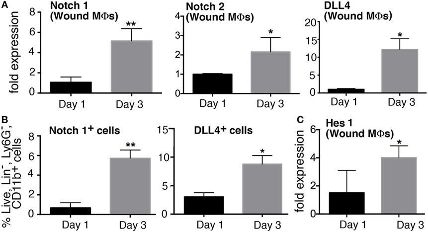Frontiers | Notch Regulates Macrophage-Mediated Inflammation in