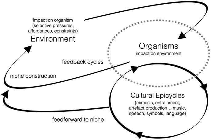 Beating Back Aquatic Entropy On Dane >> Frontiers Evolutionary Musicology Meets Embodied Cognition