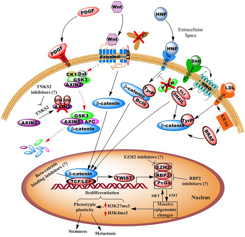 Frontiers The Epigenomics Of Embryonic Pathway Signaling In Colorectal Cancer Pharmacology