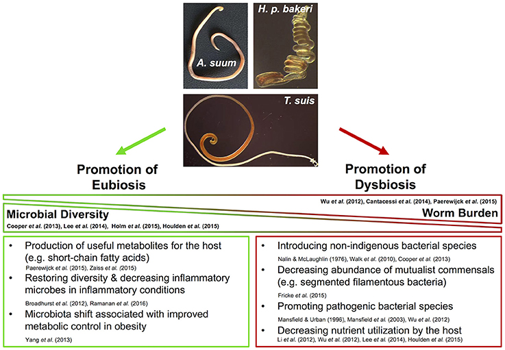 Frontiers | Reciprocal Interactions between Nematodes and