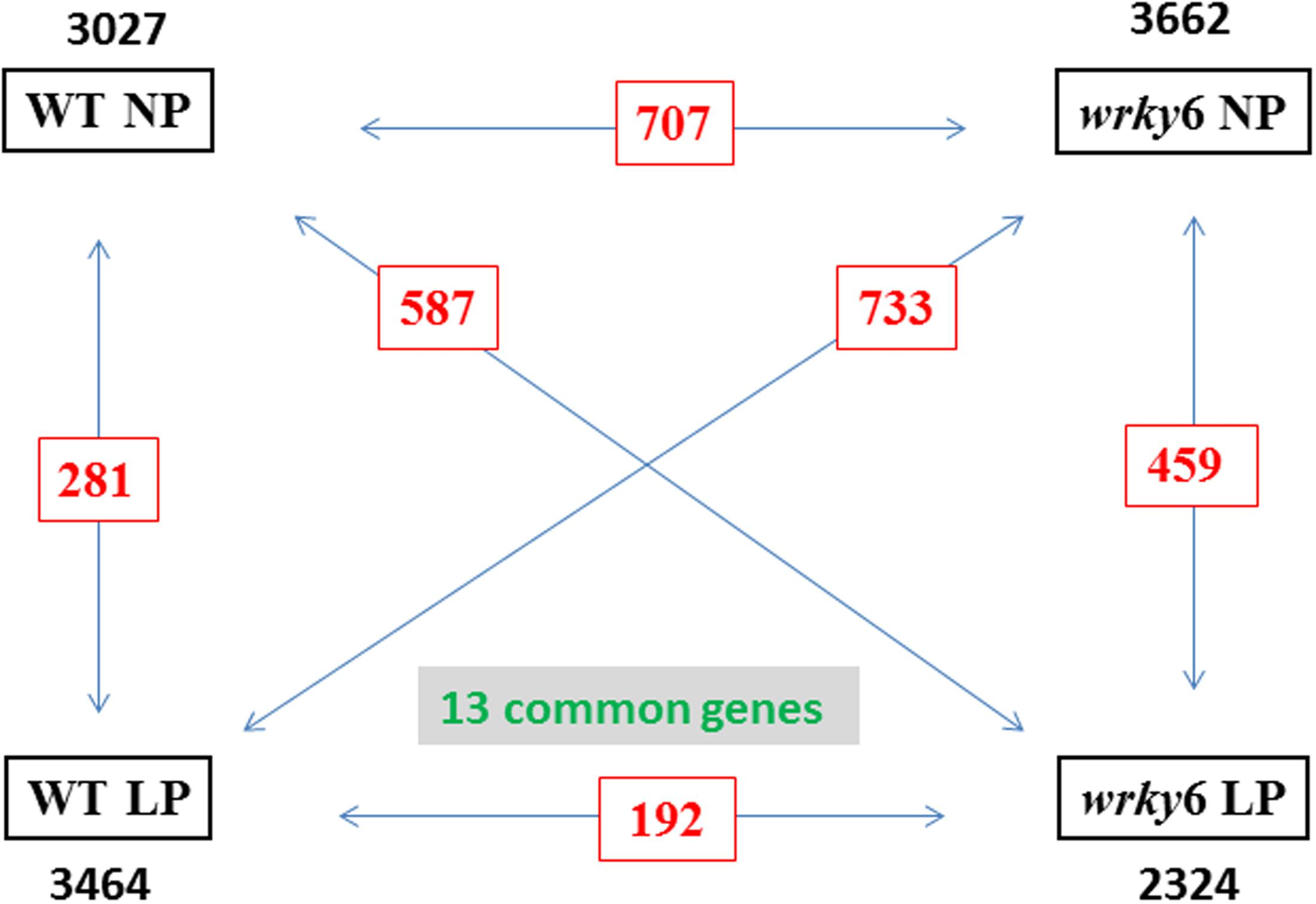 Frontiers Piriformospora Indica Reprograms Gene Expression In 300w Fm Rf Amplifier Circuit P Marian Amplifiers