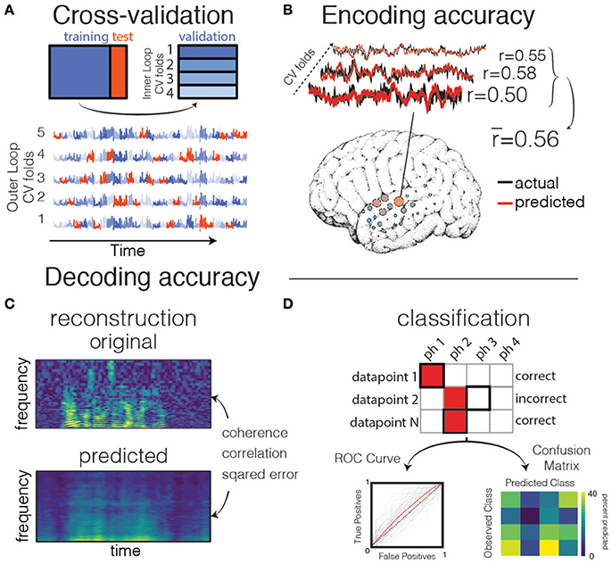 Frontiers | Encoding and Decoding Models in Cognitive