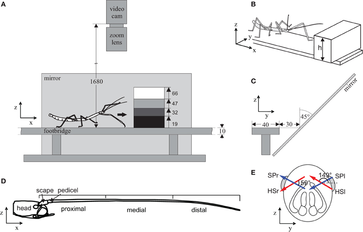 Frontiers | Active tactile sampling by an insect in a step-climbing ...